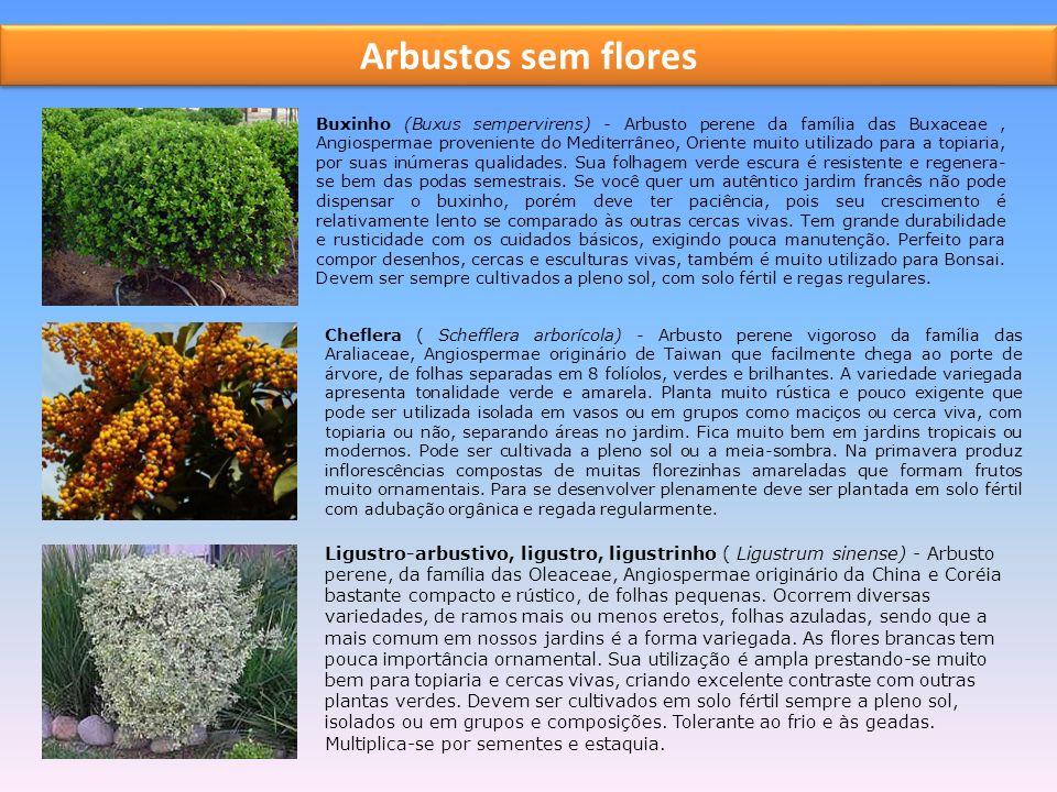 Arbustos sem flores