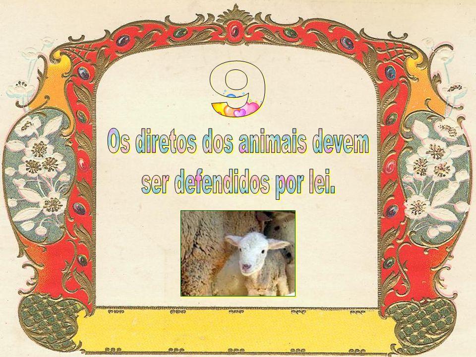 Os diretos dos animais devem