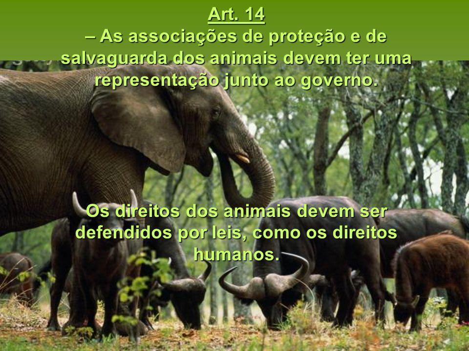 Art. 14 – As associações de proteção e de salvaguarda dos animais devem ter uma representação junto ao governo.