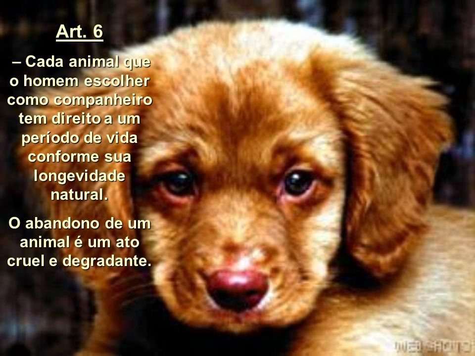 O abandono de um animal é um ato cruel e degradante.