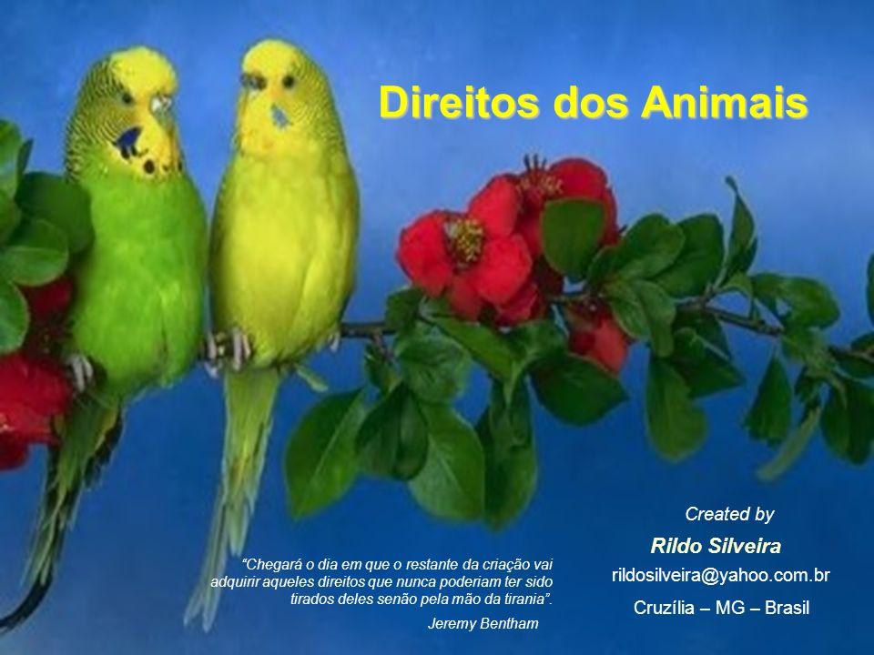 Direitos dos Animais Rildo Silveira Created by