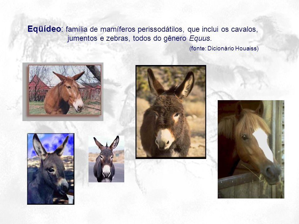 Eqüídeo: família de mamíferos perissodátilos, que inclui os cavalos,