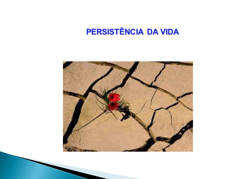 PERSISTÊNCIA DA VIDA