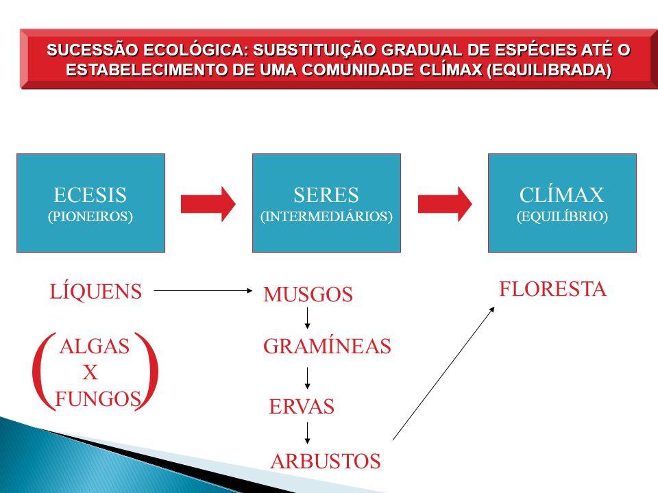 ( ) ECESIS SERES CLÍMAX LÍQUENS FLORESTA MUSGOS ALGAS X FUNGOS