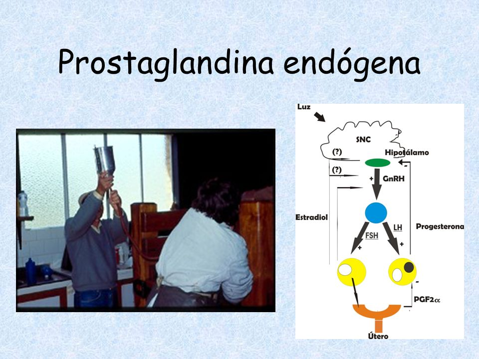 Prostaglandina endógena