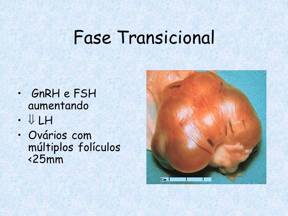 Fase Transicional GnRH e FSH aumentando  LH