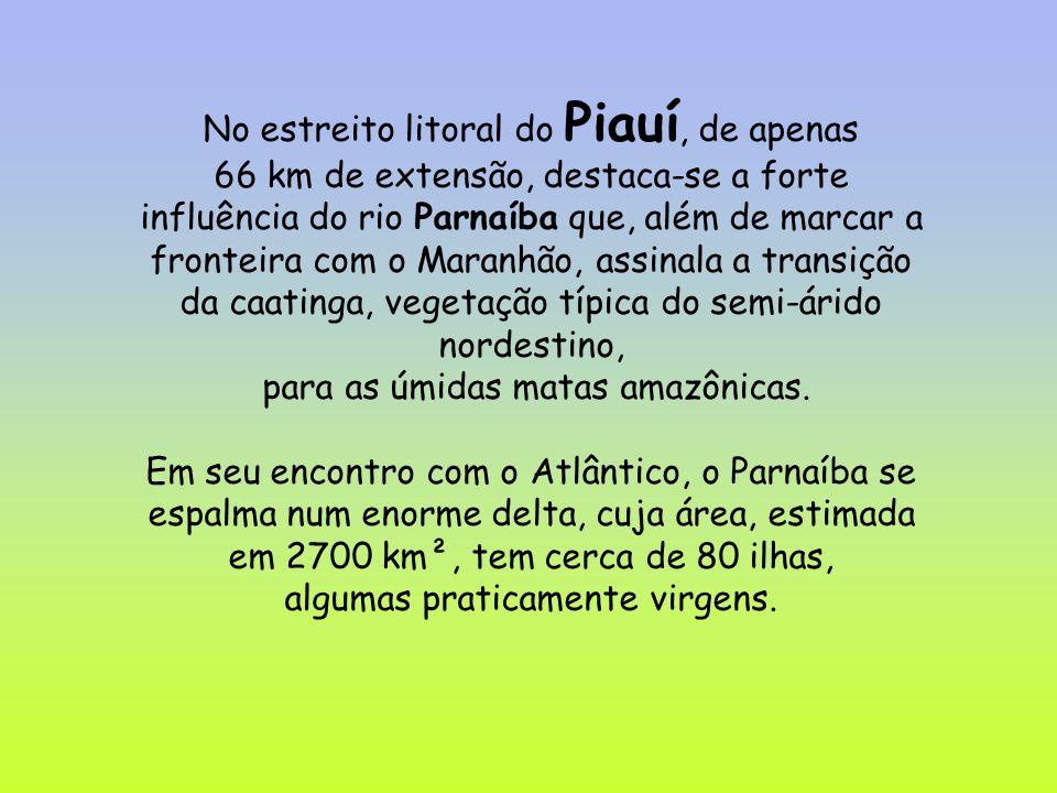 No estreito litoral do Piauí, de apenas