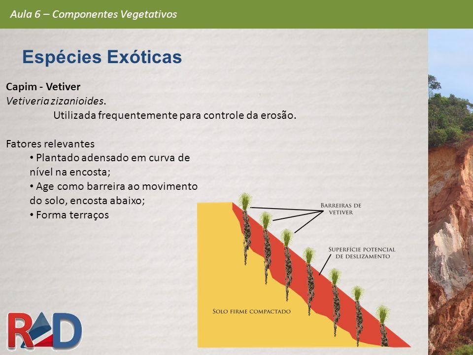 Espécies Exóticas Aula 6 – Componentes Vegetativos Capim - Vetiver