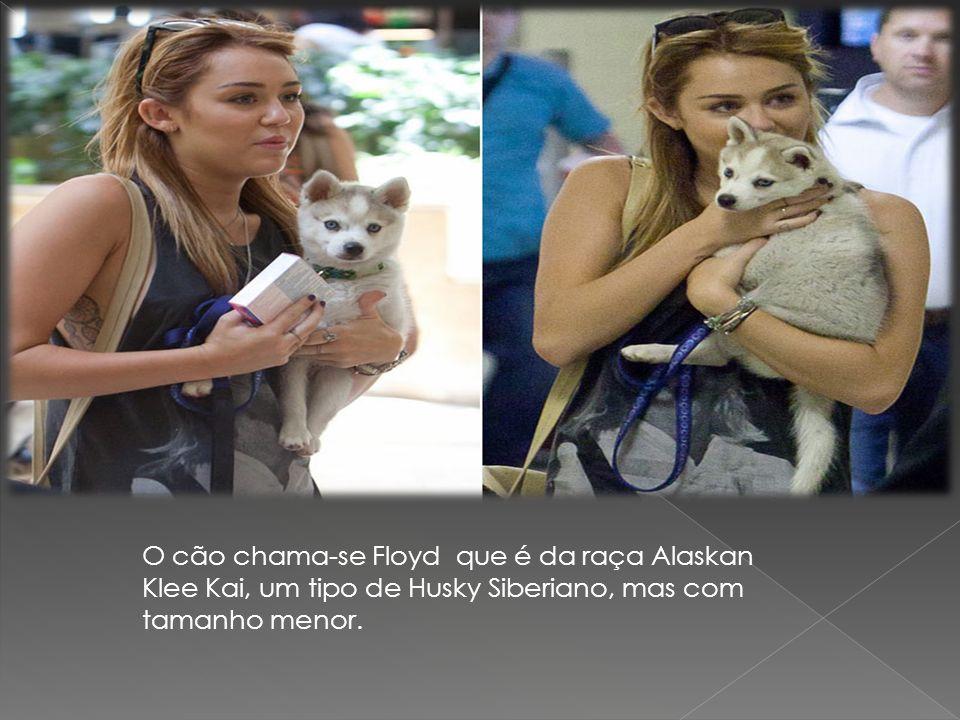 O cão chama-se Floyd que é da raça Alaskan Klee Kai, um tipo de Husky Siberiano, mas com tamanho menor.