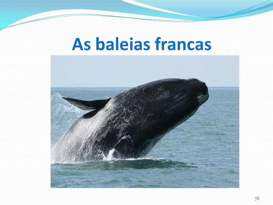As baleias francas