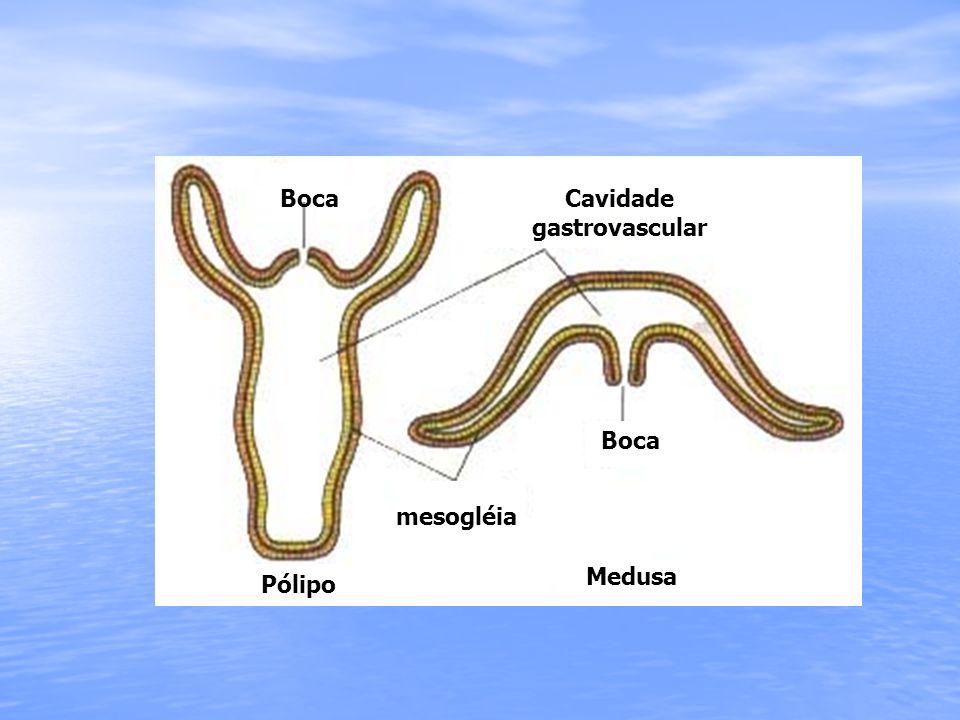 Cavidade gastrovascular