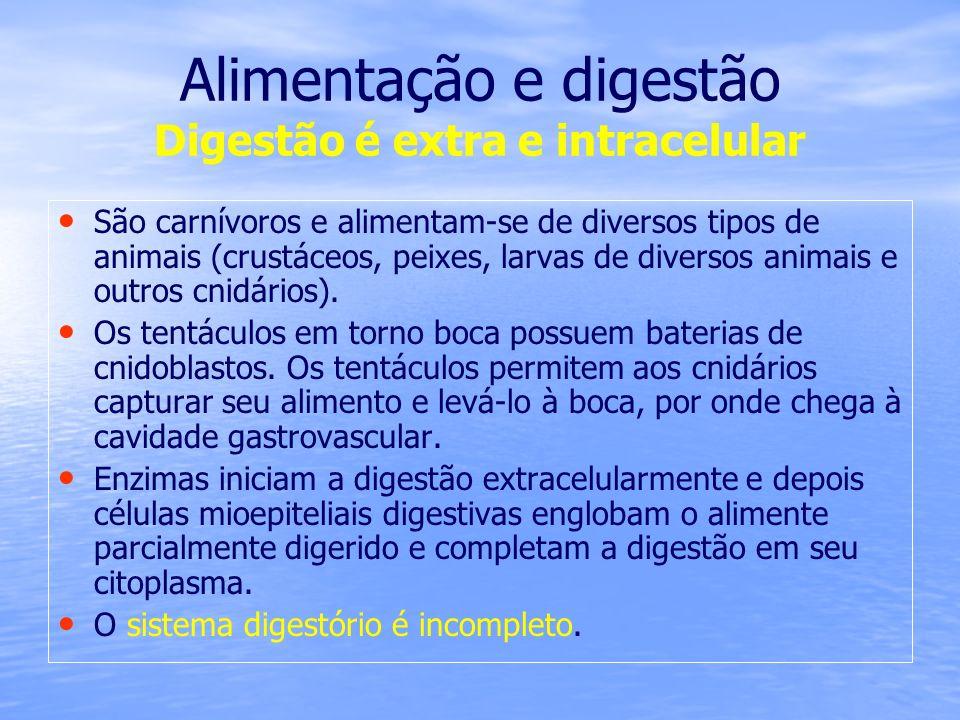 Alimentação e digestão Digestão é extra e intracelular