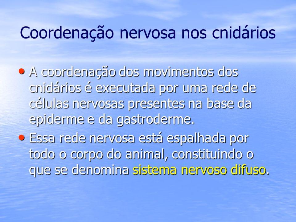 Coordenação nervosa nos cnidários