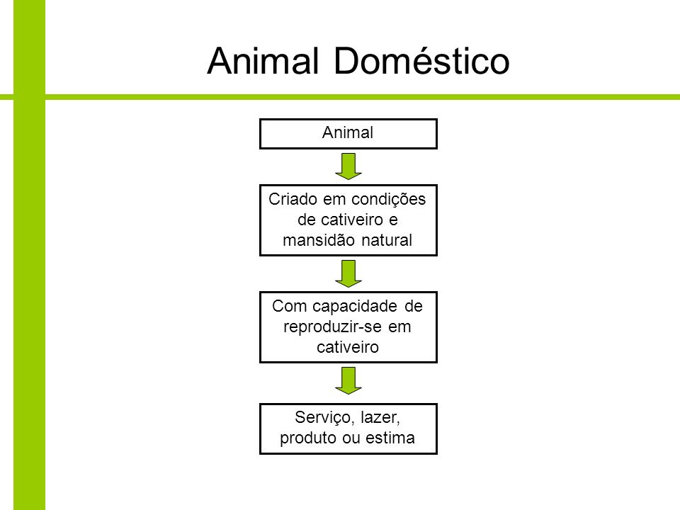Animal Doméstico Animal
