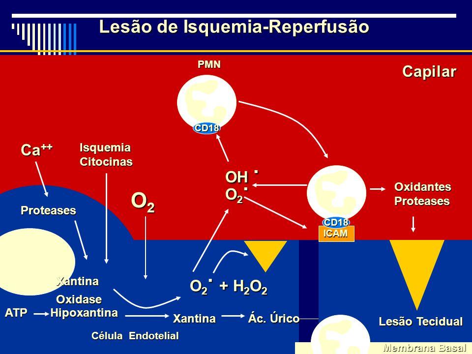 Lesão de Isquemia-Reperfusão