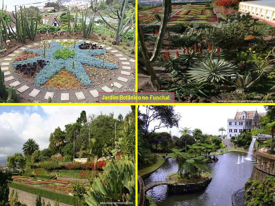Jardim Botânico no Funchal.