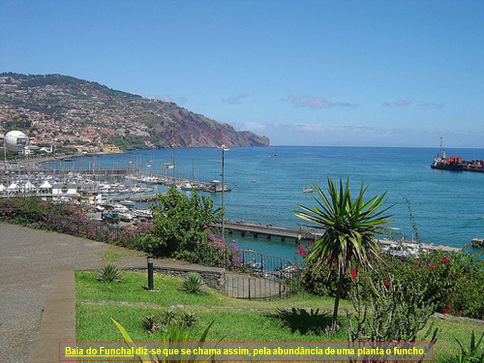 Baía do Funchal diz-se que se chama assim, pela abundância de uma planta o funcho.