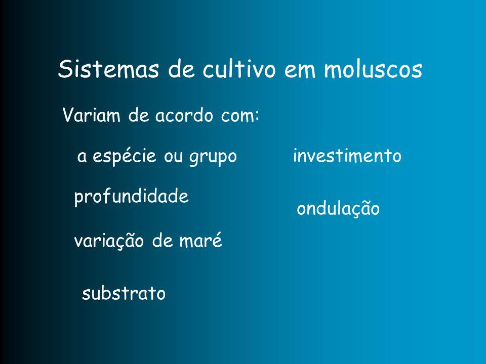 Sistemas de cultivo em moluscos