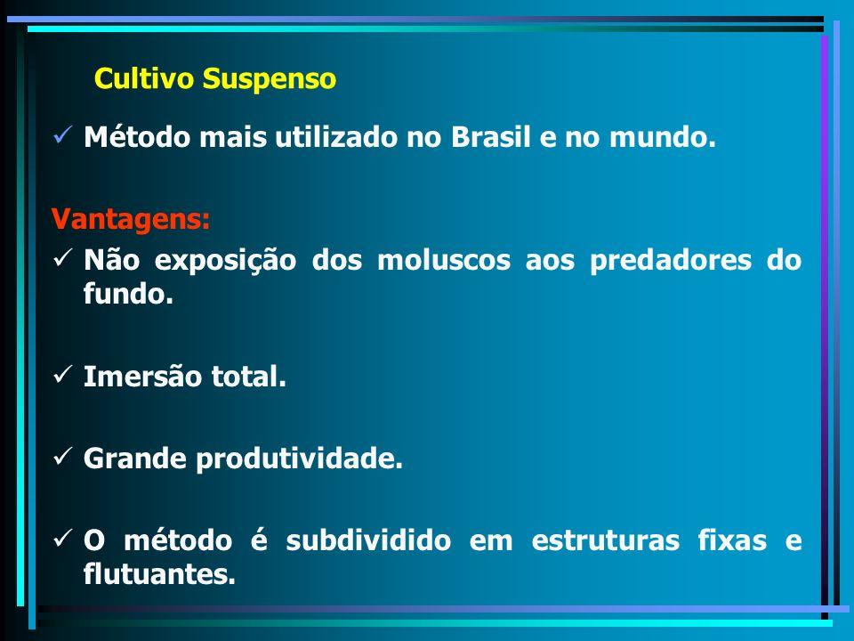 Cultivo Suspenso Método mais utilizado no Brasil e no mundo. Vantagens: Não exposição dos moluscos aos predadores do fundo.