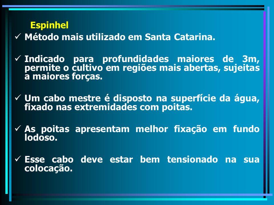 Espinhel Método mais utilizado em Santa Catarina.