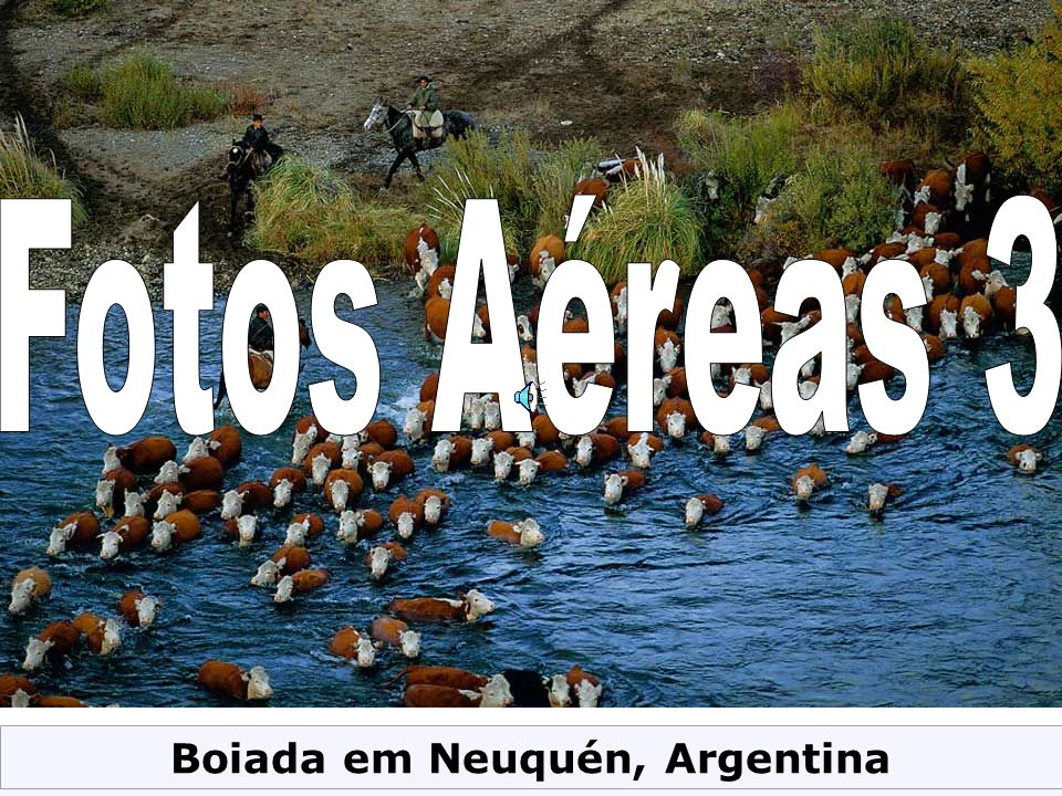 Boiada em Neuquén, Argentina