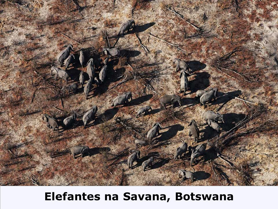 Elefantes na Savana, Botswana