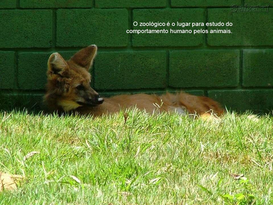 O zoológico é o lugar para estudo do comportamento humano pelos animais.