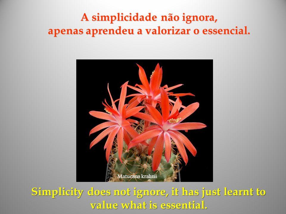 A simplicidade não ignora, apenas aprendeu a valorizar o essencial.