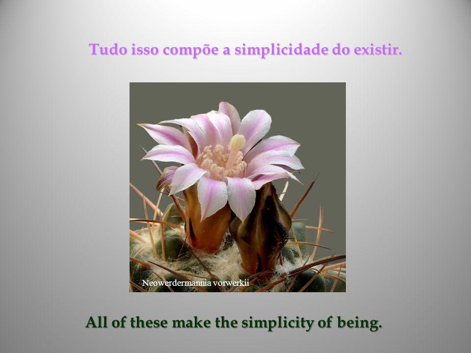 Tudo isso compõe a simplicidade do existir.