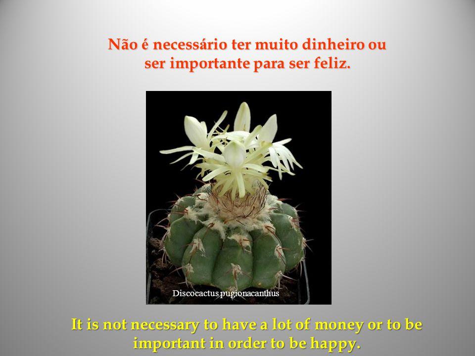 Não é necessário ter muito dinheiro ou ser importante para ser feliz.