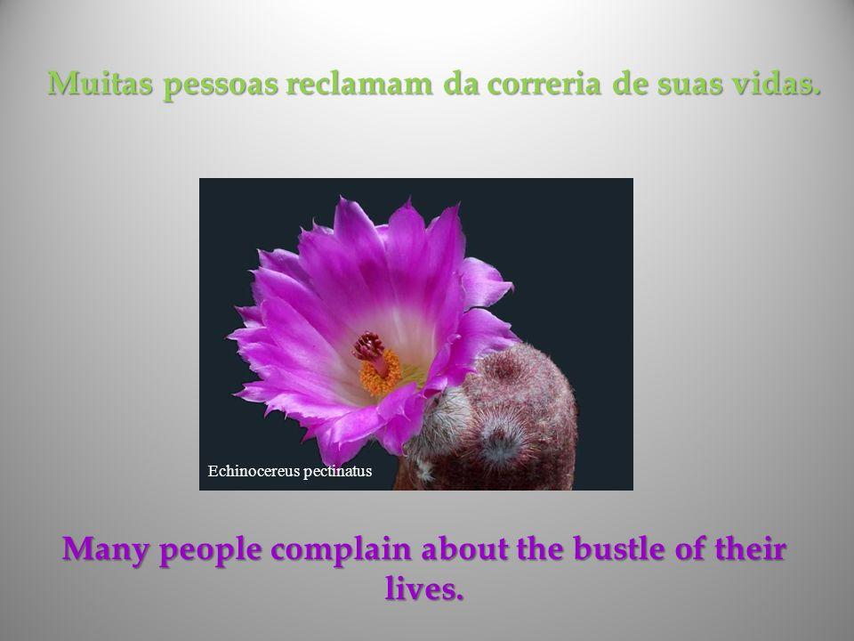 Muitas pessoas reclamam da correria de suas vidas.