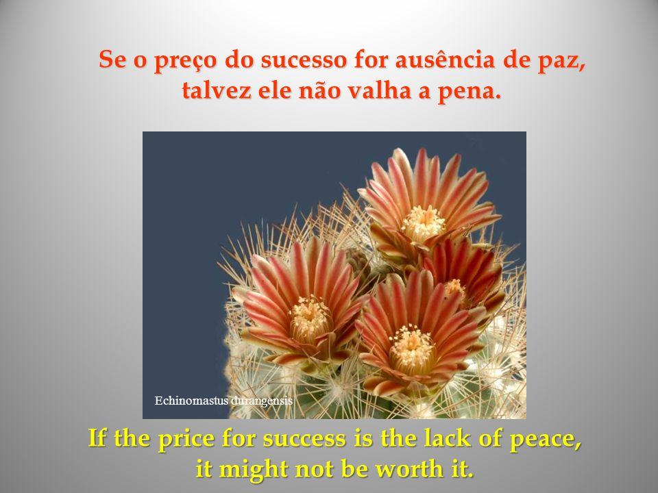 Se o preço do sucesso for ausência de paz, talvez ele não valha a pena.