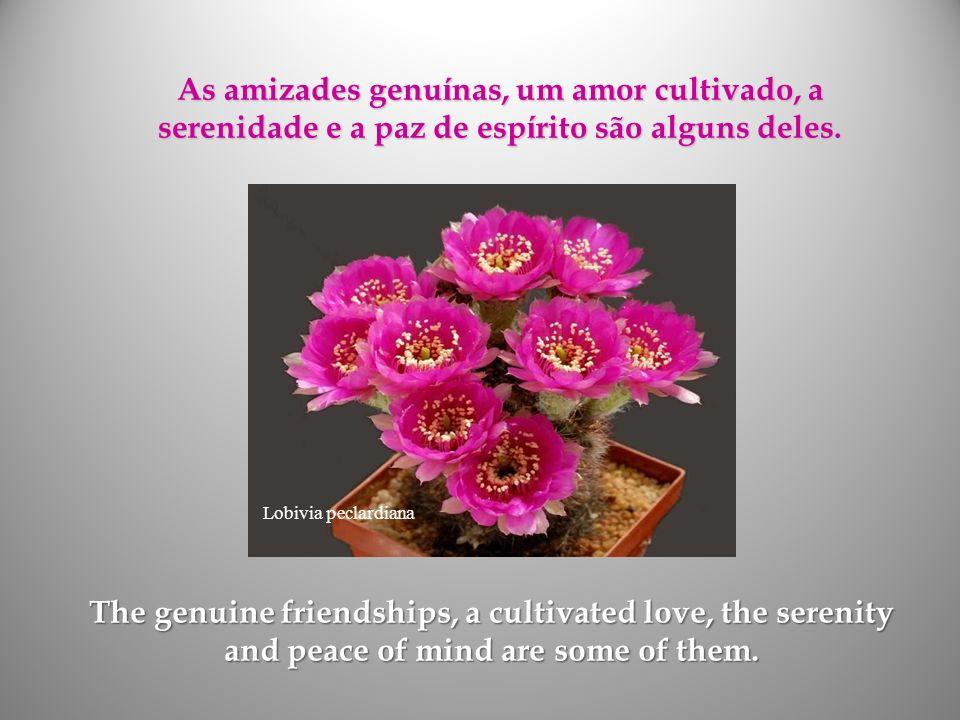 As amizades genuínas, um amor cultivado, a serenidade e a paz de espírito são alguns deles.