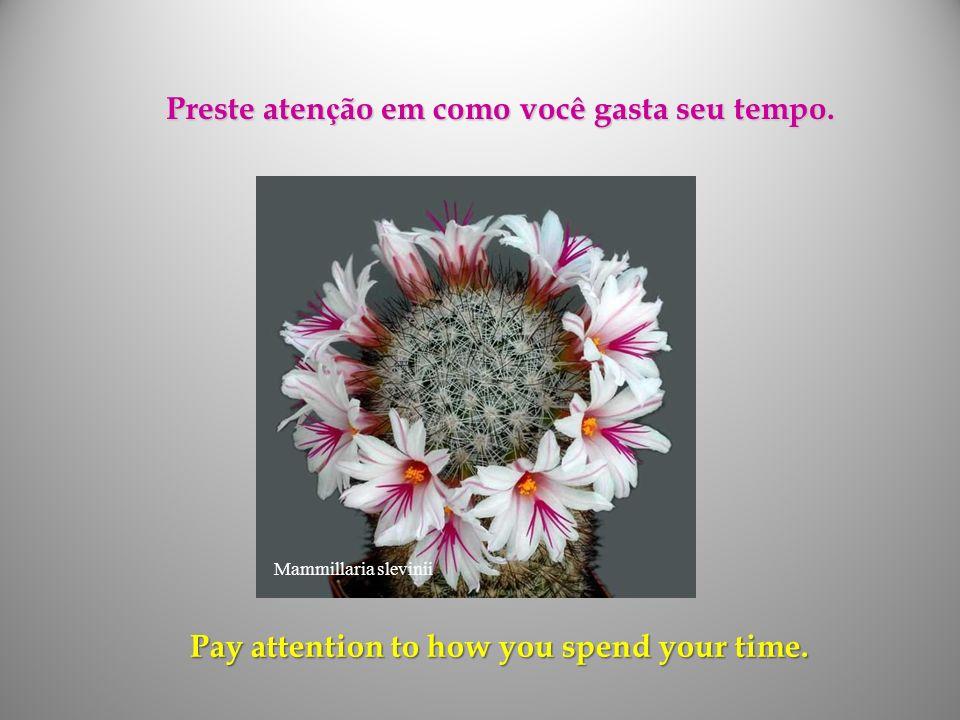 Preste atenção em como você gasta seu tempo.