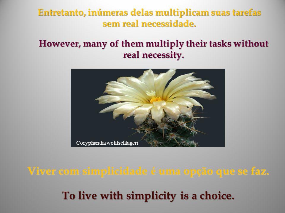 Viver com simplicidade é uma opção que se faz.
