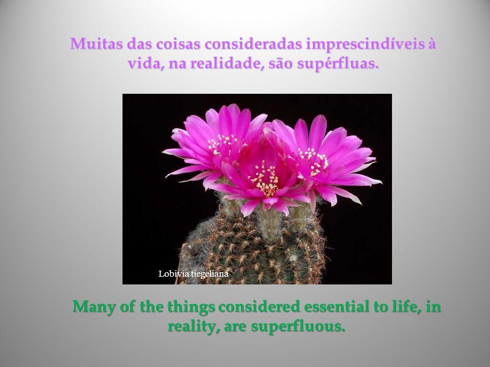 Muitas das coisas consideradas imprescindíveis à vida, na realidade, são supérfluas.