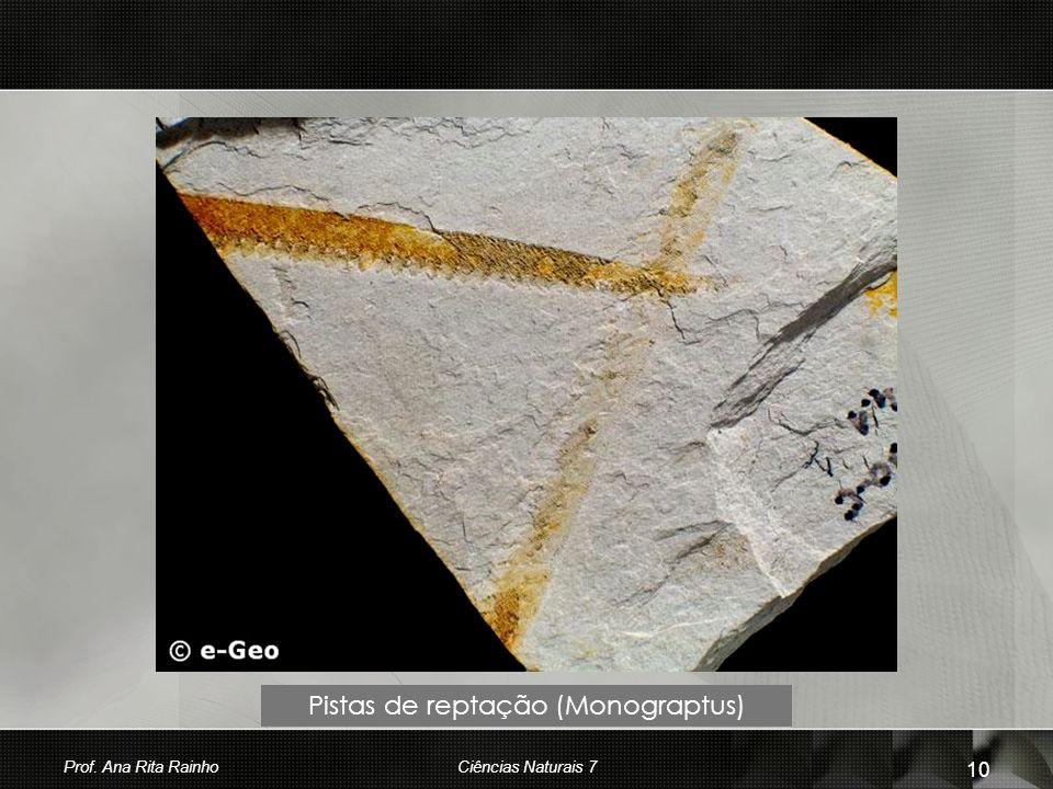 Pistas de reptação (Monograptus)
