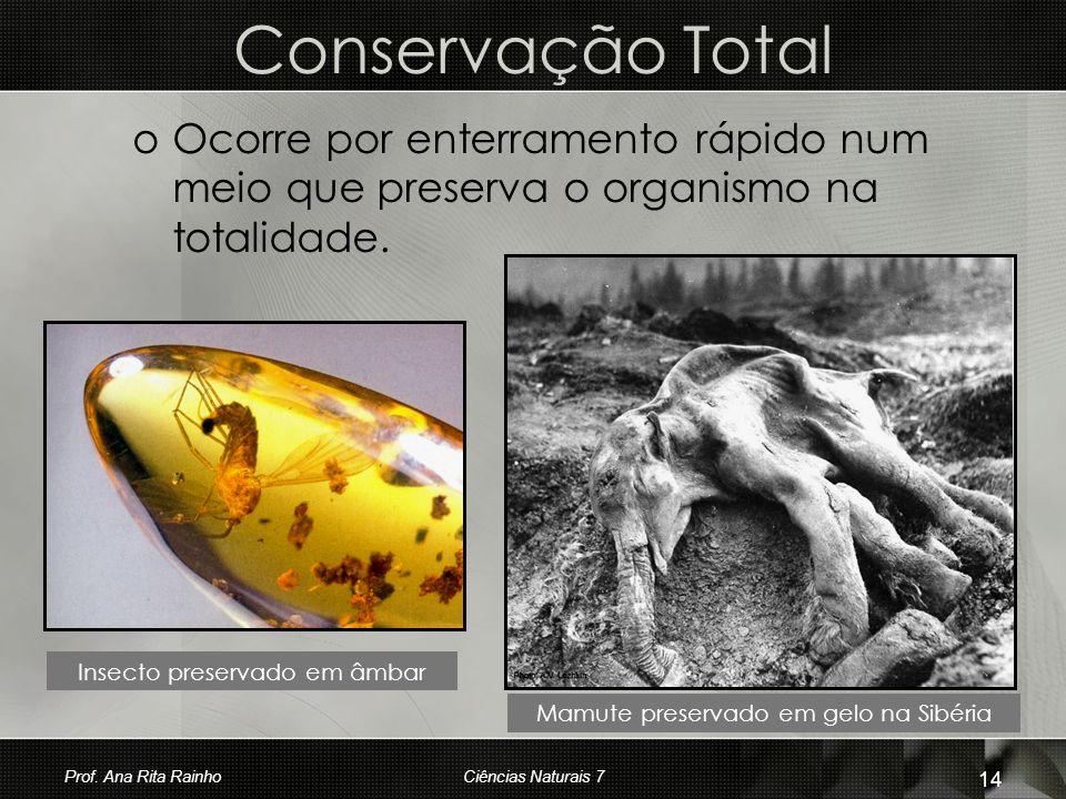 Conservação Total Ocorre por enterramento rápido num meio que preserva o organismo na totalidade. Insecto preservado em âmbar.