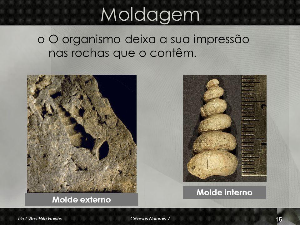 Moldagem O organismo deixa a sua impressão nas rochas que o contêm.