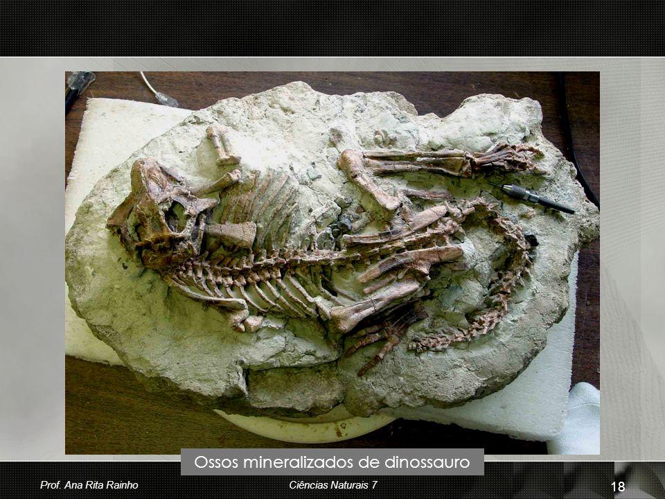 Ossos mineralizados de dinossauro