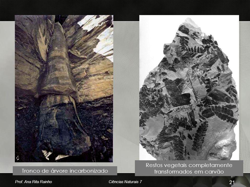 Restos vegetais completamente transformados em carvão