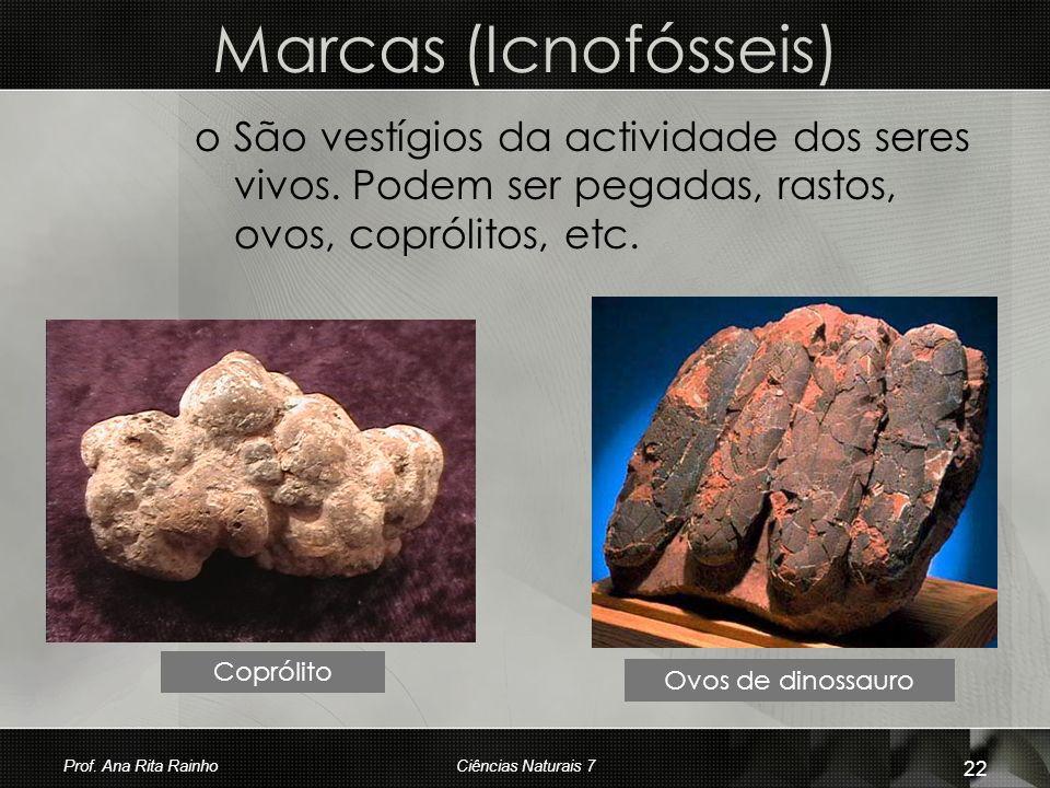 Marcas (Icnofósseis) São vestígios da actividade dos seres vivos. Podem ser pegadas, rastos, ovos, coprólitos, etc.