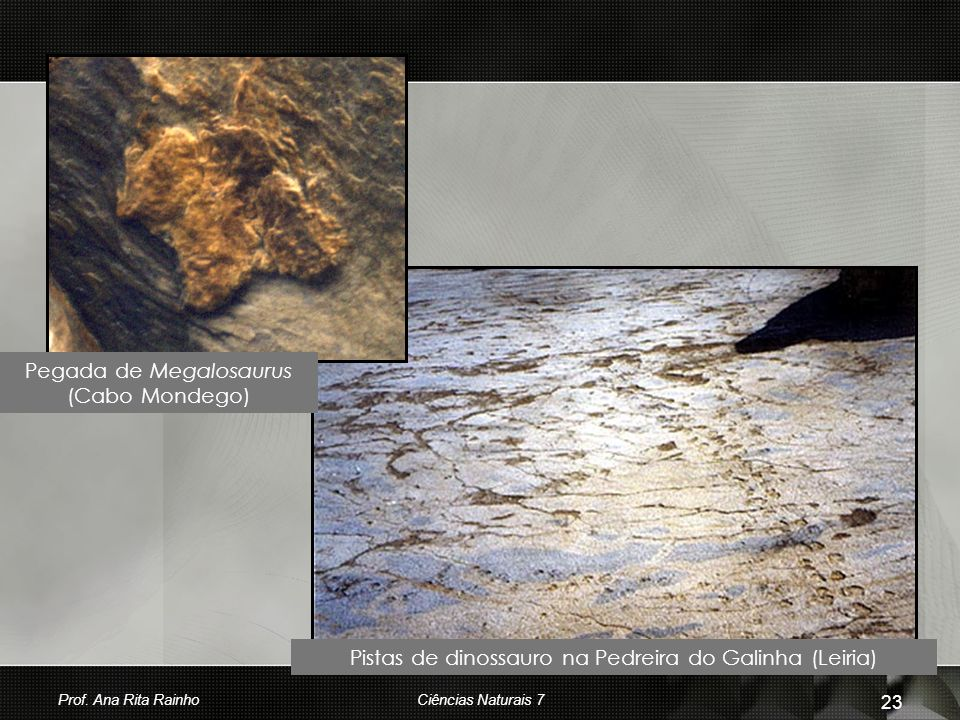 Pegada de Megalosaurus (Cabo Mondego)