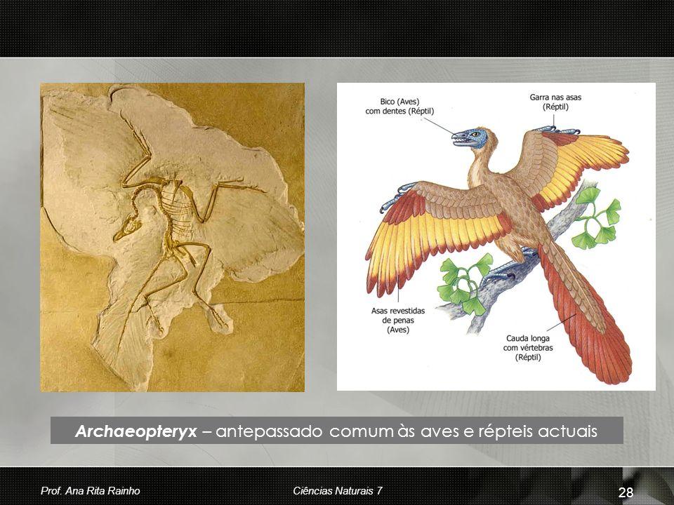 Archaeopteryx – antepassado comum às aves e répteis actuais