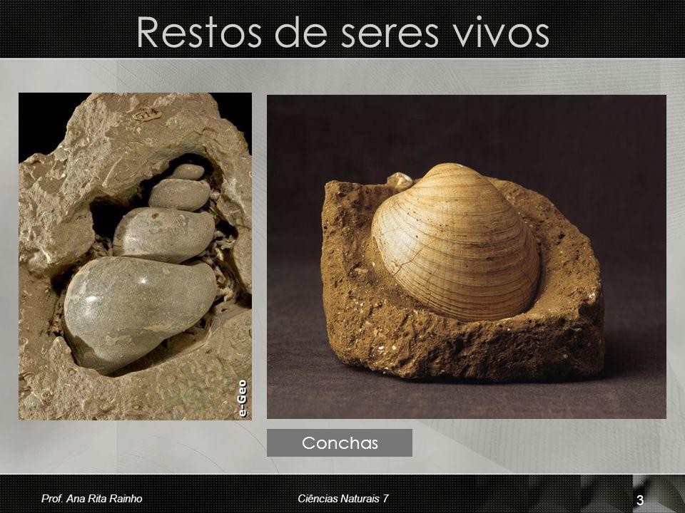 Restos de seres vivos Conchas Prof. Ana Rita Rainho