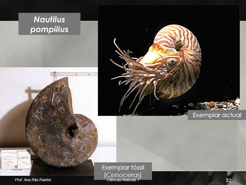 Exemplar fóssil (Cenoceras)