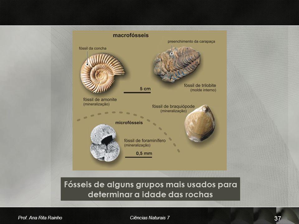 Fósseis de alguns grupos mais usados para determinar a idade das rochas