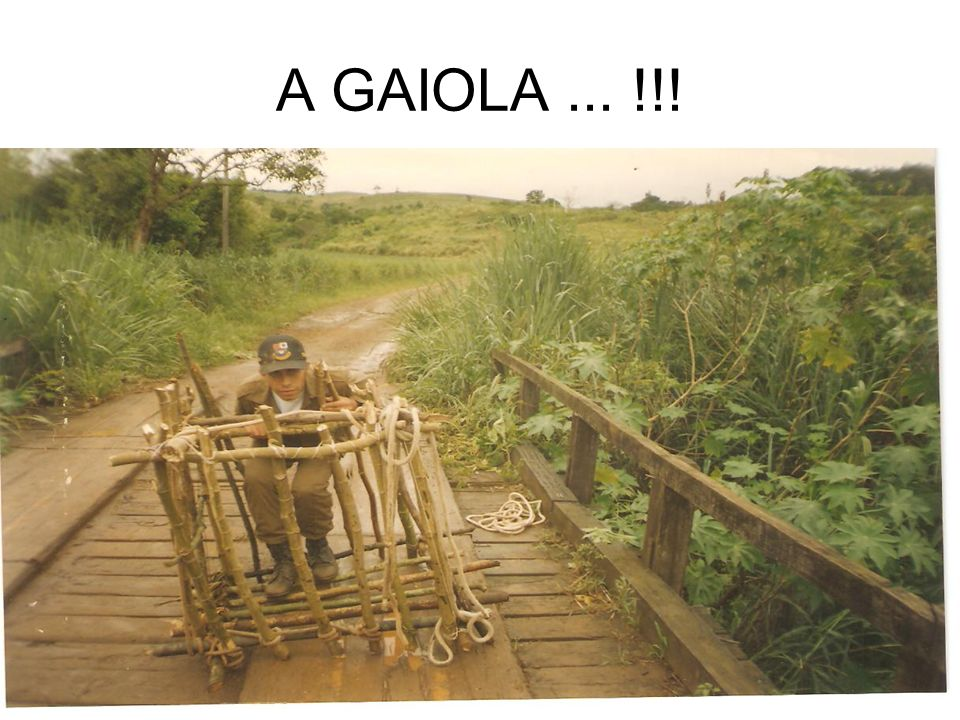 A GAIOLA ... !!!