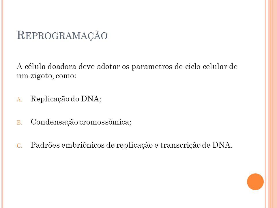 Reprogramação A célula doadora deve adotar os parametros de ciclo celular de um zigoto, como: Replicação do DNA;