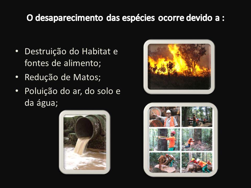 O desaparecimento das espécies ocorre devido a :